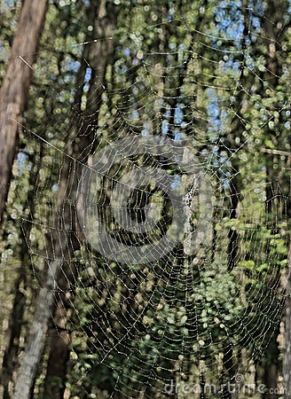HDR spider web in the forest