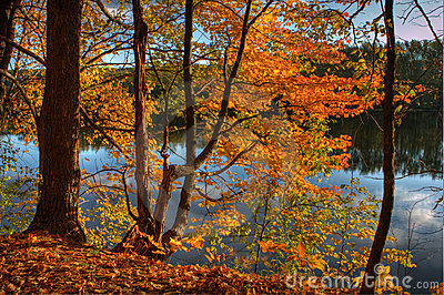 HDR of Trees on a Riverbank.