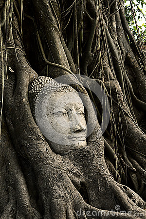 Head Ancient Buddha