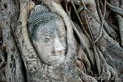 Head of Ancient Buddha in tree