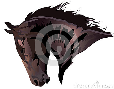 Head of bay horse