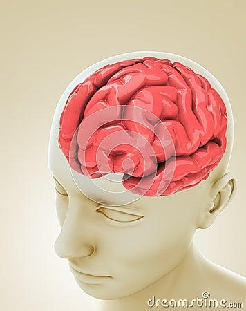 Head Brain