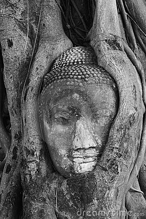 The head of Buddha
