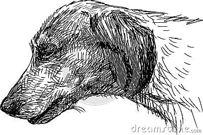 Head of  dachshund