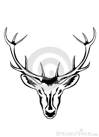 Head of deer with horns