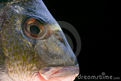 Head of a fish