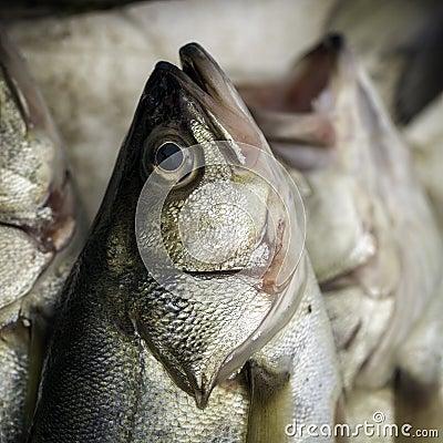 Head of a fish