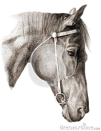 Free Head-horse Royalty Free Stock Photos - 2403168