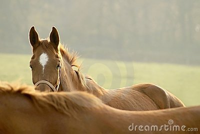 Head of horse in the light of the rising sun