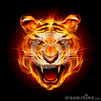 Free Head Of A Tiger In Flame Stock Photos - 32439963