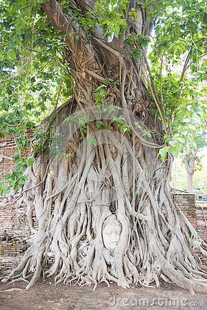 Free Head Of Ancient Buddha Statue In Tree Roots At Mahathat Temple Royalty Free Stock Image - 75779136