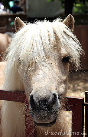 Free Head Pony Funny Hairstyle Stock Photo - 2731810