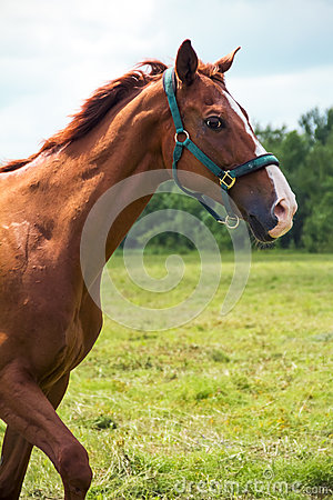 Head Of Red Horse Stock Images - Image: 25618784