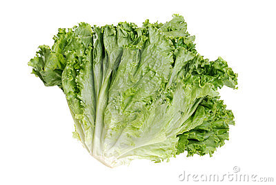 Head of roman leaf lettuce