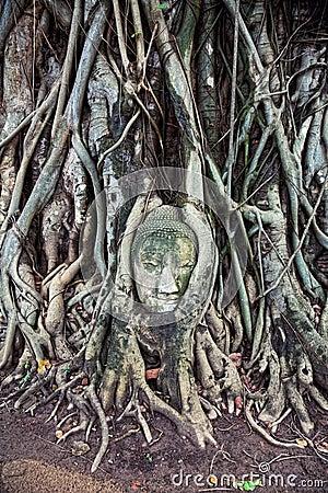Head of the sandstone buddha