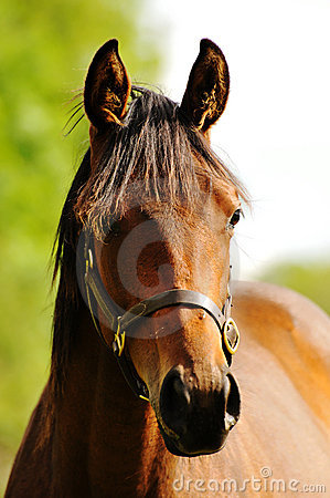 Head shot of a beautiful horse