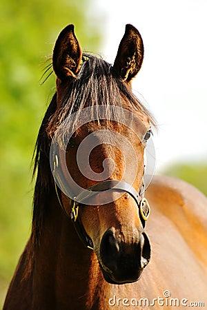 Head shot of a beautiful horse