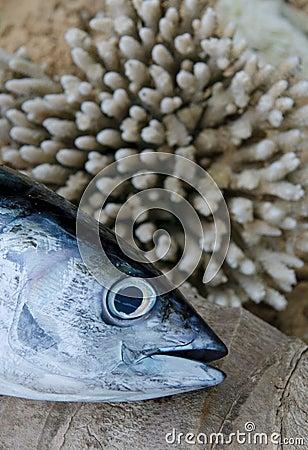 Head of tuna fish