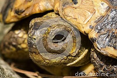 Head turtle
