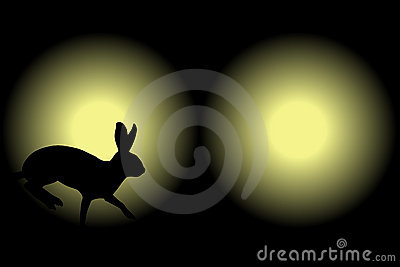 Headlight rabbit