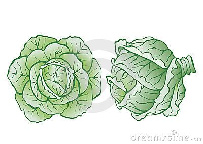 Heads of cabbage
