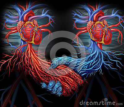 Health agreement medical concept with a group of two human hearts with    Human With Two Hearts