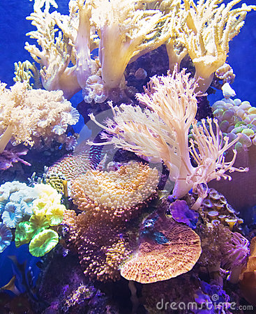 Free Healthy And Vibrant Coral Reef Stock Image - 28301891