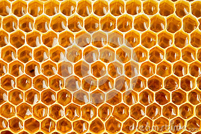 Healthy food bee honey in honeycomb