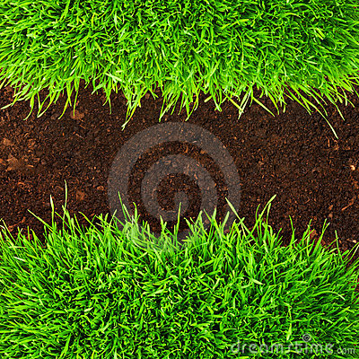 Healthy grass in soil