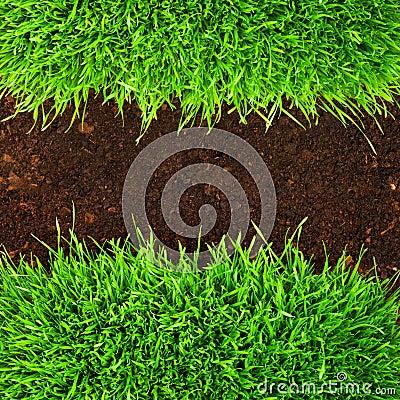Healthy grass in soil