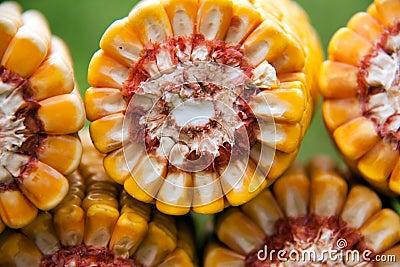 Healthy organic corn