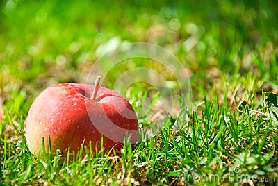 Healthy red apple
