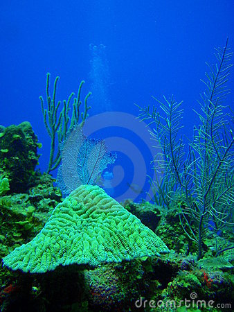Free Healthy Reef Xcalak I Royalty Free Stock Images - 15283569
