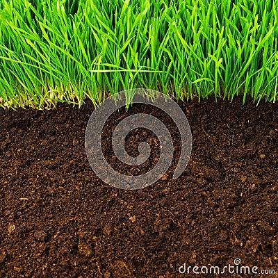 Healthy in soil