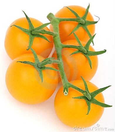 Healthy yellow cherry tomato with green stalk