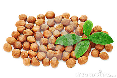 Heap of fresh shelled hazelnuts with green leaves isolated