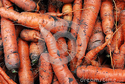 Heap of Carrots