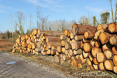 Heap of logs