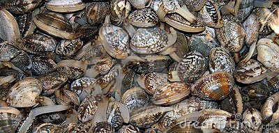 Heap of mollusks