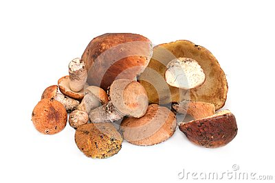 Heap of mushrooms
