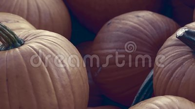 Heap of Red Pumpkins, Cucurbita maxima, Pan Shot vídeos de arquivo