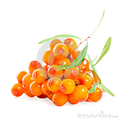 Heap of sea buckthorn berries twigs is isolated on white backgro Stock Photo