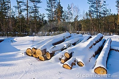 Heap of snowbound logs