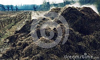 heap-steaming-cow-dung-11606453.jpg