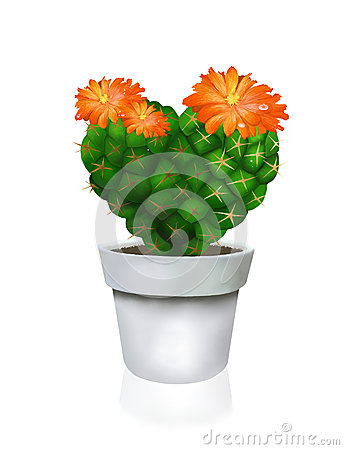 Heart Cactus in White Pot