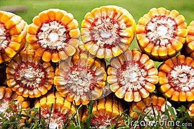 Heart of corn cobs