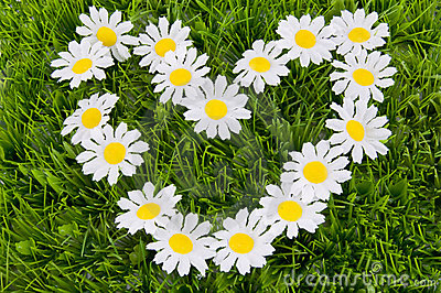 Heart of daisies on the grass