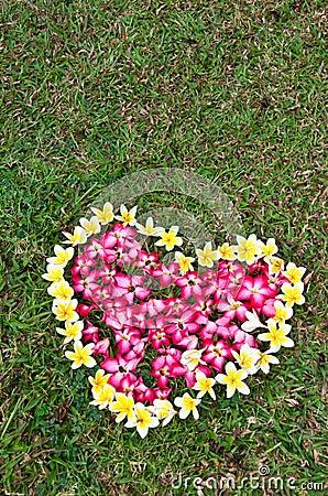 Heart flower on yard