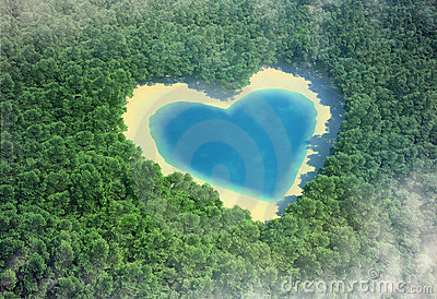 Heart in the forest