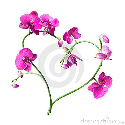 Free Heart From Pink Orchids Isolated Stock Photo - 13767890